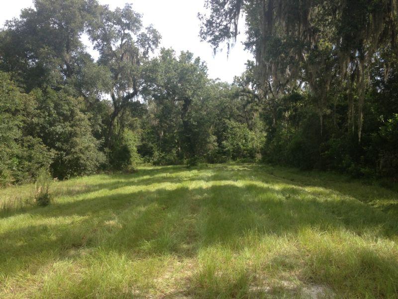Owner Financing 10 Acres Mol : Lot for Sale : Brooksville : Hernando