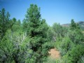 Northern Az Forested Cabin Site : Show Low : Apache County : Arizona