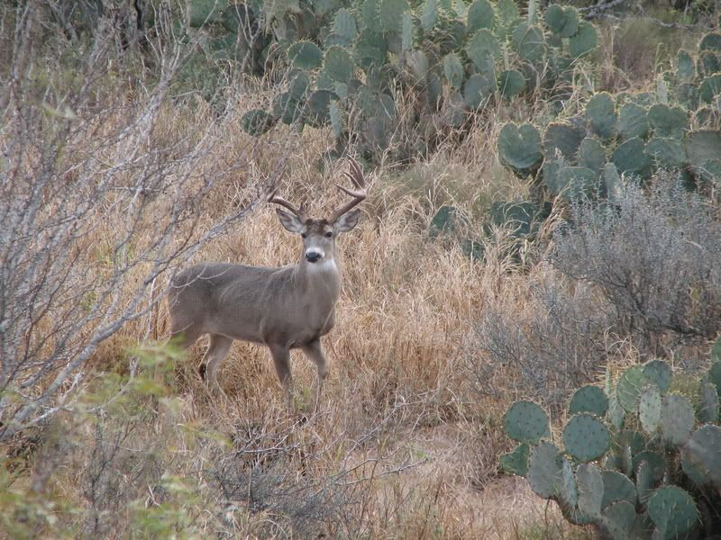 13.88 Acres Of Hunting Land : San Diego : Duval County : Texas