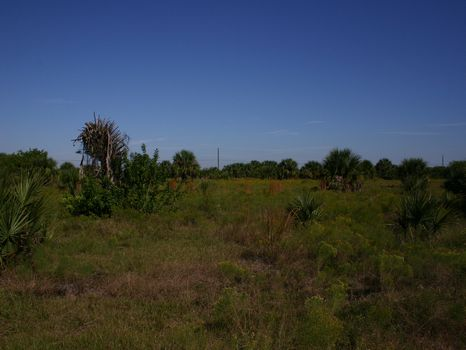 Equestrian Estate Lot : Fellsmere : Indian River County : Florida
