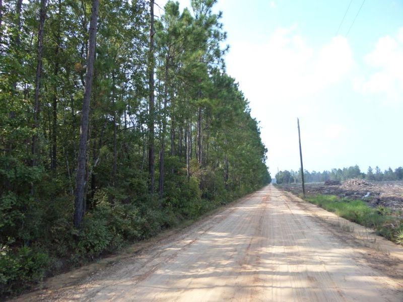 20 Acres On Roger Break Rd : Jesup : Wayne County : Georgia
