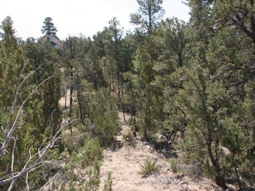 Forested Heber, Az Cabin Site : Heber : Navajo County : Arizona