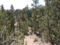Forested Heber, Az Cabin Site : Heber : Navajo County : Arizona