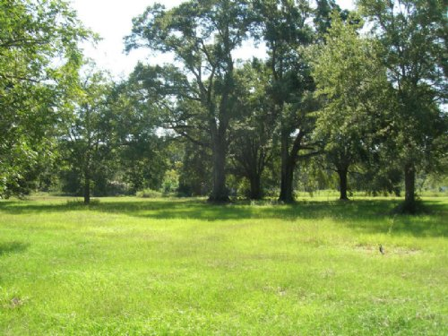 .23 Acre Lot Bell 3581 Fredrick Ave : Bell : Gilchrist County : Florida