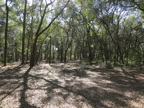 5 Acres In Melrose-live Oaks : Melrose : Alachua County : Florida