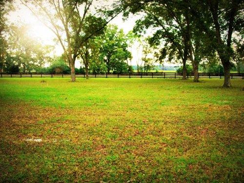 11+/- Acs Orchard Covena Farm Par B : Swainsboro : Emanuel County : Georgia