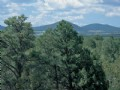 Mountain Pine Ranch Cabin Site