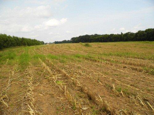 Jones Tract 3 : Rice : Prince Edward County : Virginia