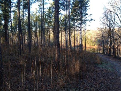 Burban Creek Lot : Travelers Rest : Greenville County : South Carolina