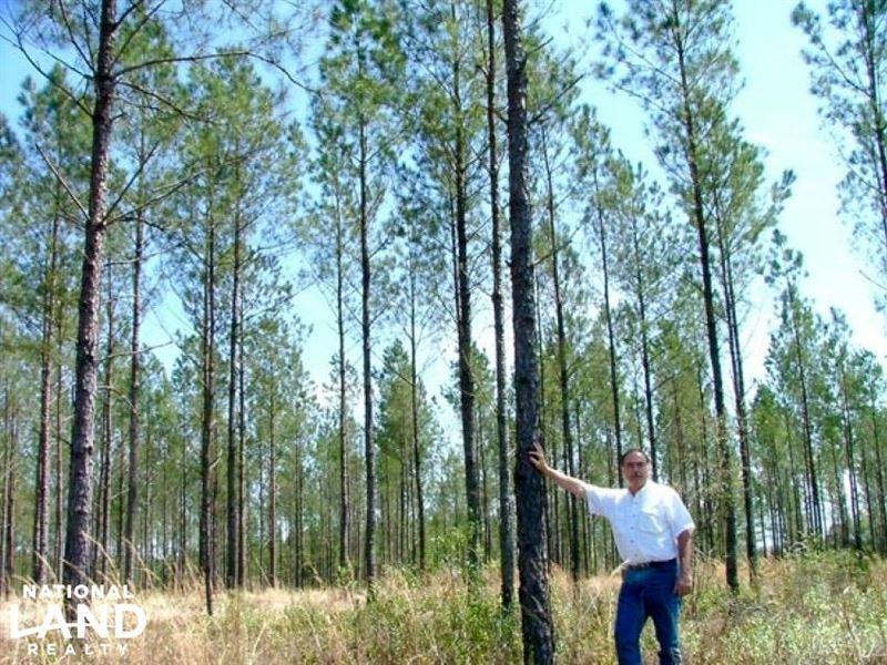 The Old Brady Road Lots, 1 : Robertsdale : Baldwin County : Alabama
