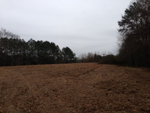 Perfect Homesite- 12+/- Acres : Troy : Pickens County : Alabama