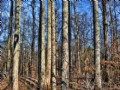 7.32 Acre Wooded Home Site