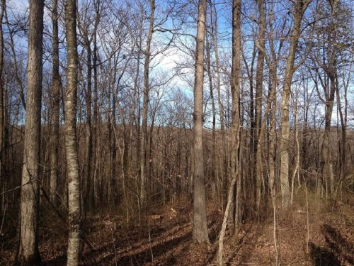 Bank Owned 5.7+/- Acres : South Pittsburg : Marion County : Tennessee