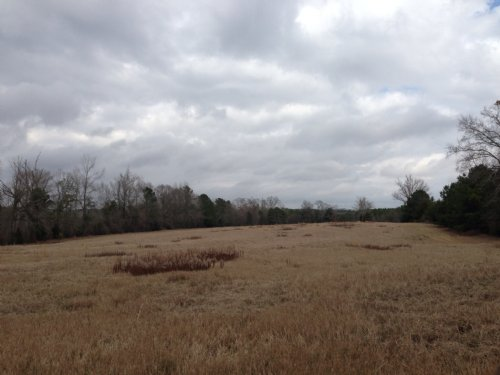 10.83 +/- Ac Of Pasture Land : Goshen : Pike County : Alabama
