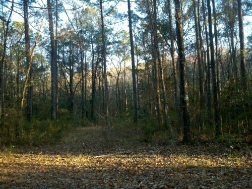 Perfect Small Hunting Tract : Woodbine : Camden County : Georgia