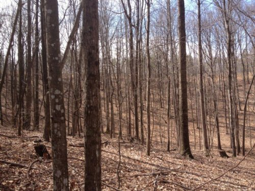 8.00+/- Near Franklin State Forest : South Pittsburg : Marion County : Tennessee