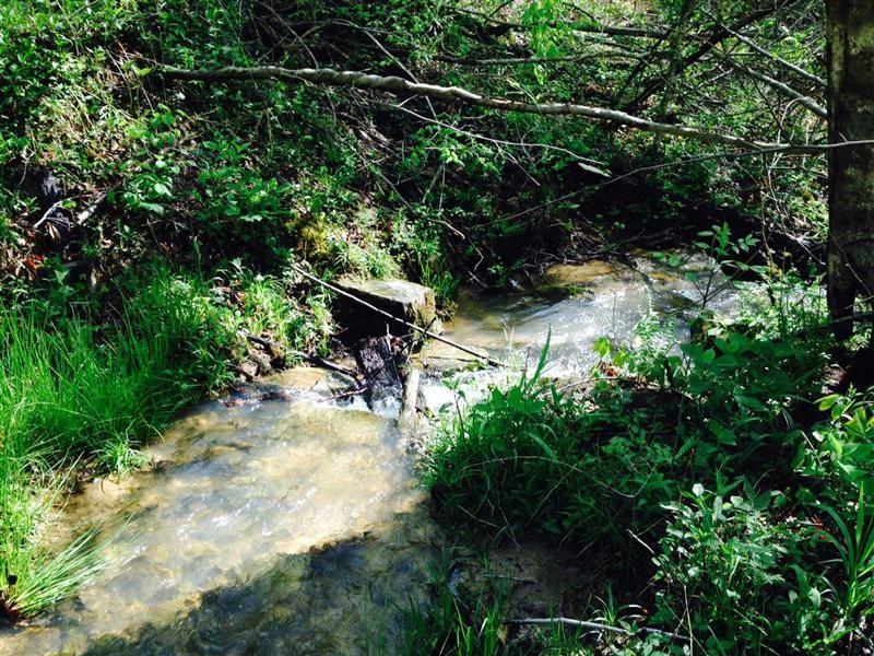 Detweiler 10 : Cub Run : Hart County : Kentucky