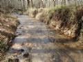 8ac On 674 Feet Of Trout Stream : Ellijay : Gilmer County : Georgia