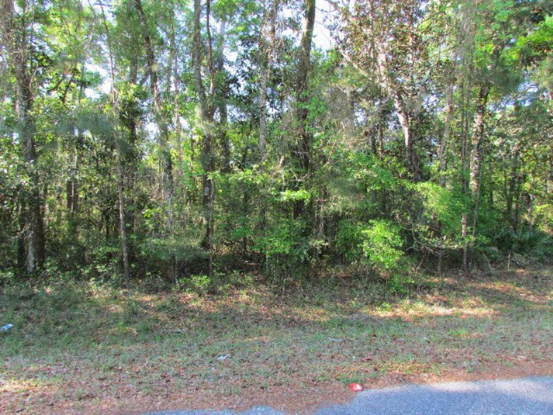 Wooded Lot Near Suwannee : Chiefland : Levy County : Florida
