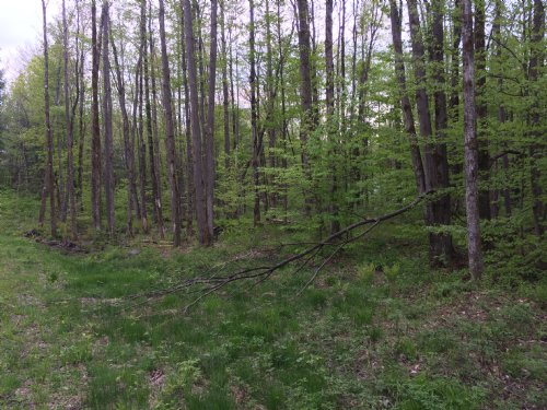 Camp Site In Ny Snowmobile Country : Redfield : Oswego County : New York