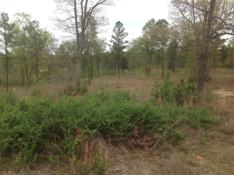 Simpsonville Residential Lot : Simpsonville : Greenville County : South Carolina