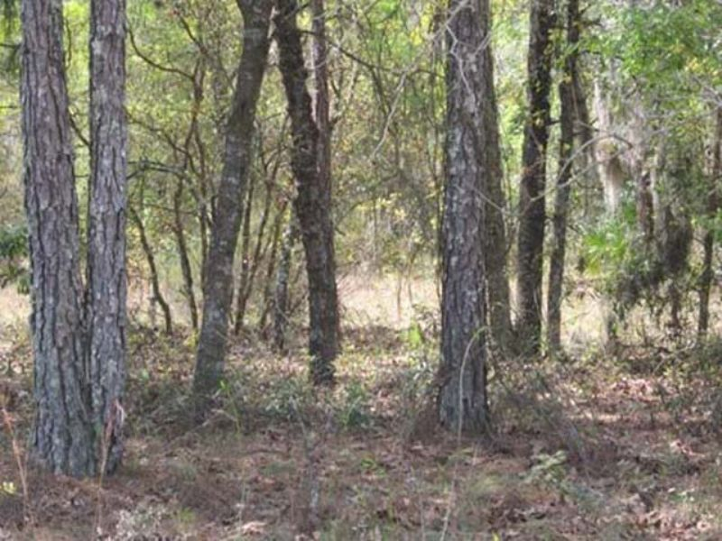 Auction : Interlachen : Putnam County : Florida