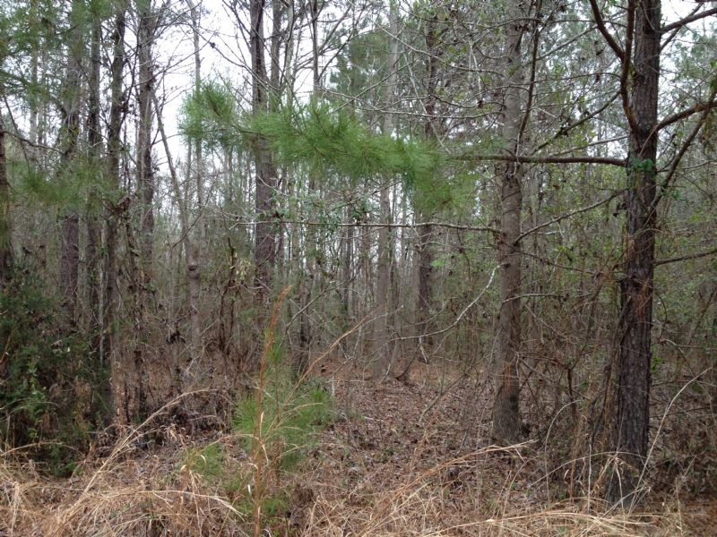 4.5 Acres Wesson School District : Stronghope : Copiah County : Mississippi