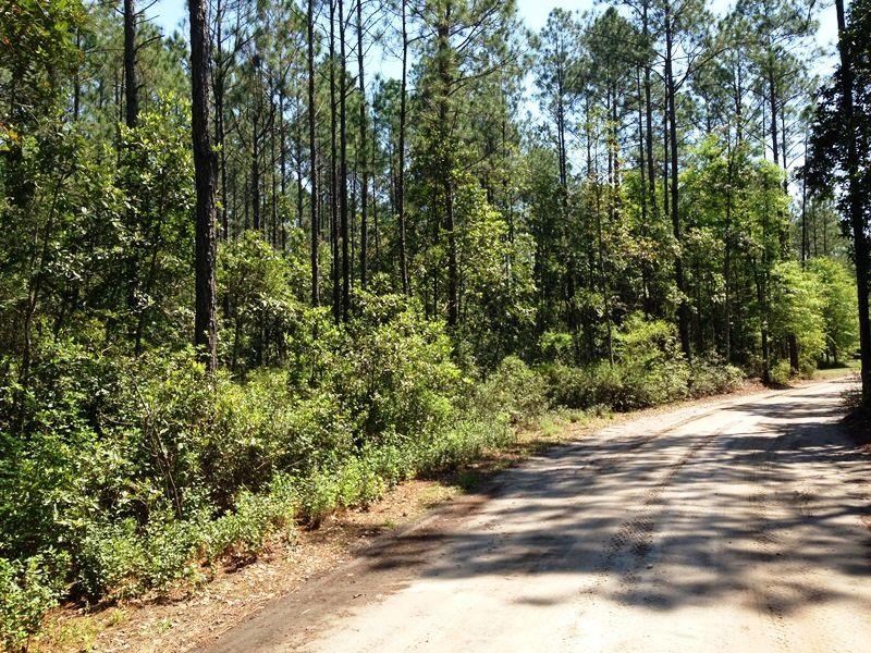 Great Satilla Preserve Lot : White Oak : Camden County : Georgia