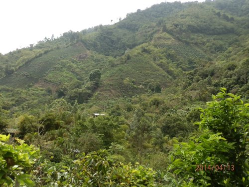 Mountain 10 Acre Minifarm : Orosi Valley : Costa Rica