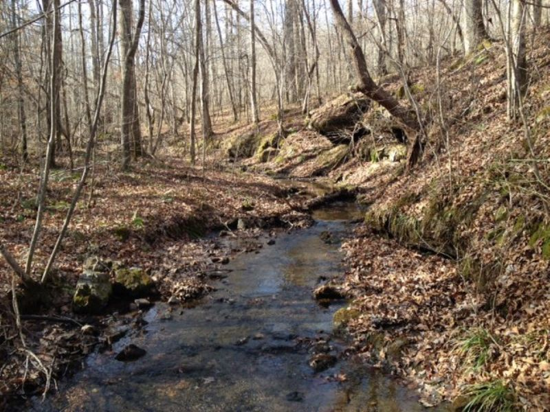 Creek And Waterfalls : Hohenwald : Lewis County : Tennessee