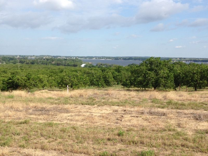 Crooked Lake Homesite And Grove : Babson Park : Polk County : Florida