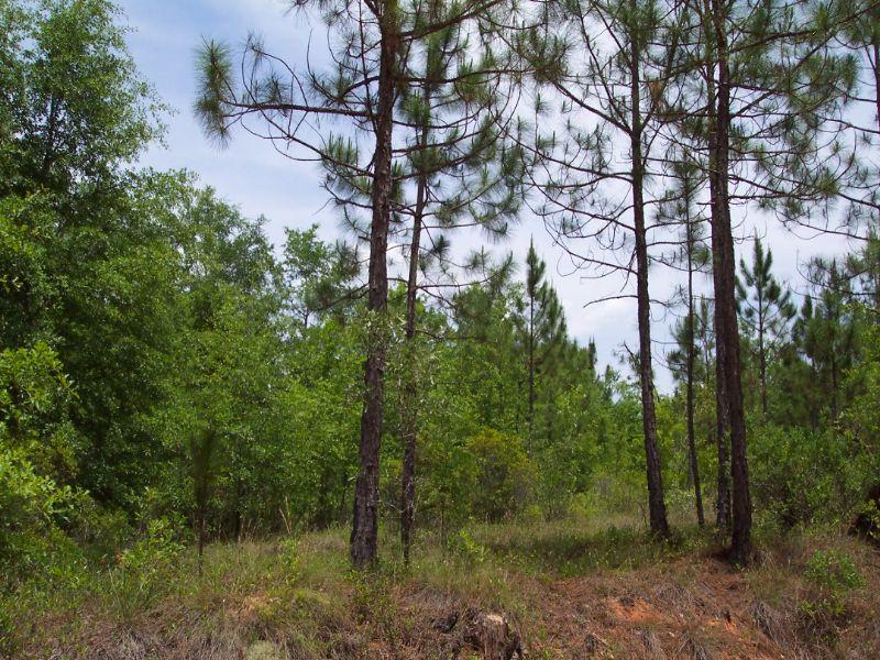 4.18 Acre Parcel - Plantation Dr : Soperton : Treutlen County : Georgia