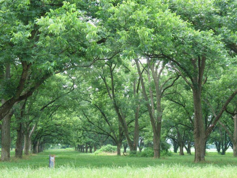 2 Acres: West Helena, Ar 72390 : West Helena : Phillips County : Arkansas