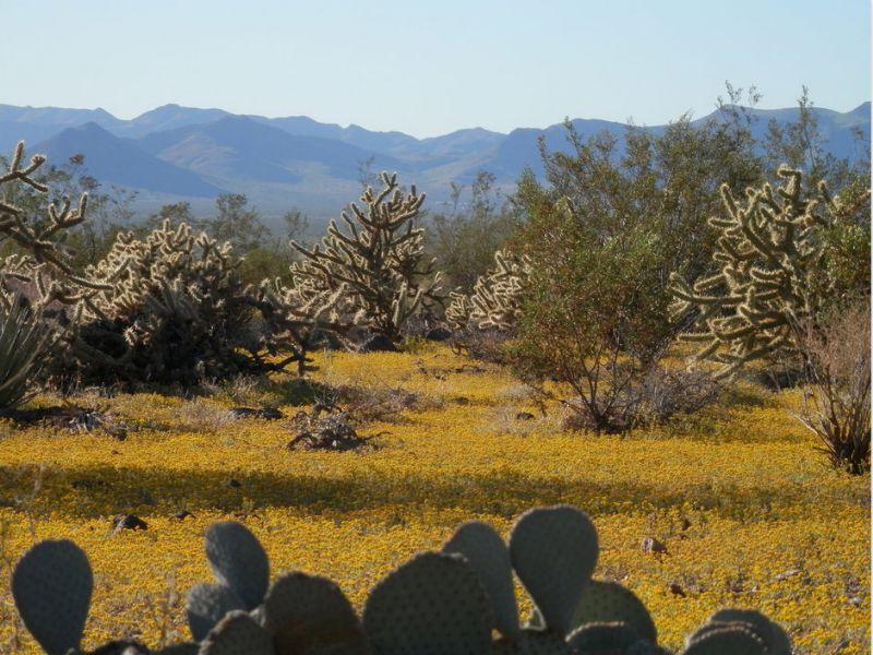 2.35 Acres: Golden Valley, Az 86413 : Golden Valley : Mohave County : Arizona