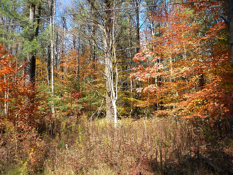 16+ Wooded Acres Near Ithaca : Danby : Tompkins County : New York