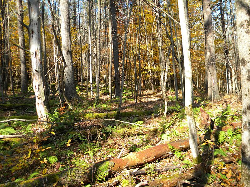 5+ Acres Near State Forest : Danby : Tompkins County : New York