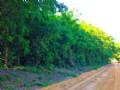 Gip Road : Millen : Jenkins County : Georgia