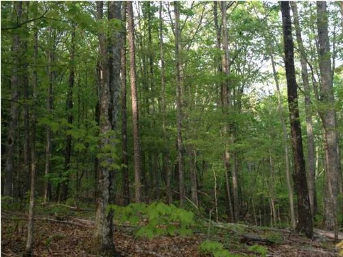 15+/- Acres With Views : Sale Creek : Hamilton County : Tennessee