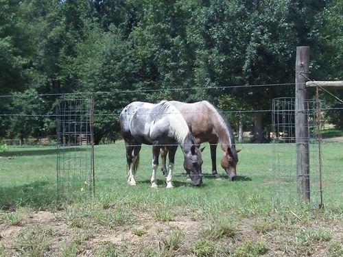 Barnes Mountain Farms - 5.52 Acre : Monticello : Jasper County : Georgia