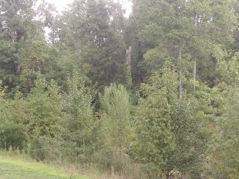 Carriage Farms, 1.55 Acre Lot : Gray Court : Laurens County : South Carolina