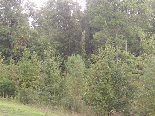 Carriage Farms - 1.55 Acre Lot : Gray Court : Laurens County : South Carolina