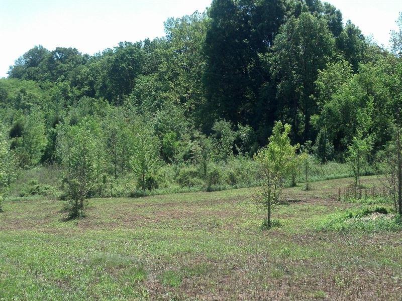 Creekside Farms, 1.83 Acre Lot : Hickory Tavern : Laurens County : South Carolina