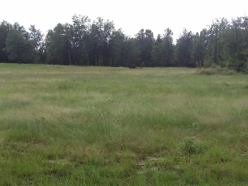 Huck Finn Farms, 5.06 Acre Lot : Batesburg-Leesville : Aiken County : South Carolina