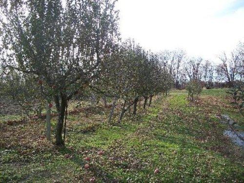 Orchard : Emden : Shelby County : Missouri