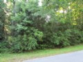 Beautiful Wooded Lot 768288 : Chiefland : Levy County : Florida