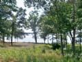 Lake View (#28229)
