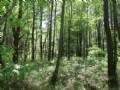 Camp Site Bordering The Wild