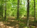 5 Acres, Owner Financing, $495 Dn : Cleveland : White County : Georgia