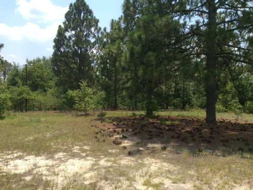 2.5 Acres - Lexington, Sc : Lexington : South Carolina