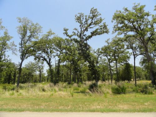 1.2 Acre Wooded Homesite : Iola : Grimes County : Texas